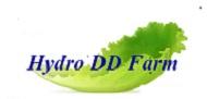 เว็บไซต์ HydroDD Farm,in Pattaya Thailand,Hydroponics Vegetables and System ...We Care Your Health !