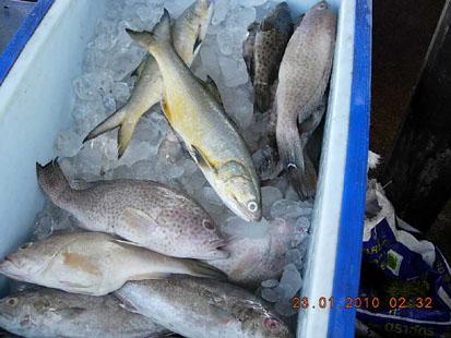 ปลาทะเลสดๆ