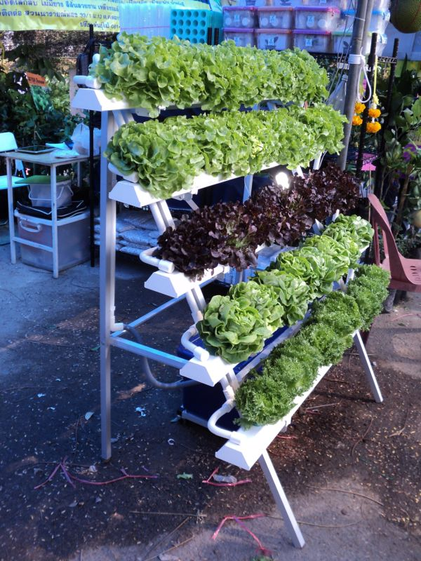 ชุดปลูกผักไฮโดรโปนิกส์ แบบขั้นบันได ขนาด 1.5 เมตร 5 รางปลูก